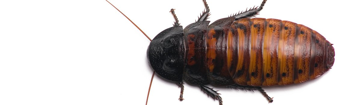 impact pest control bug
