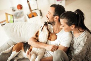 Assicurazioni casa, bambini e animali domestici Sassari