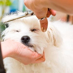 Dog Groomer In Shropshire Dog Grooming By Sarah