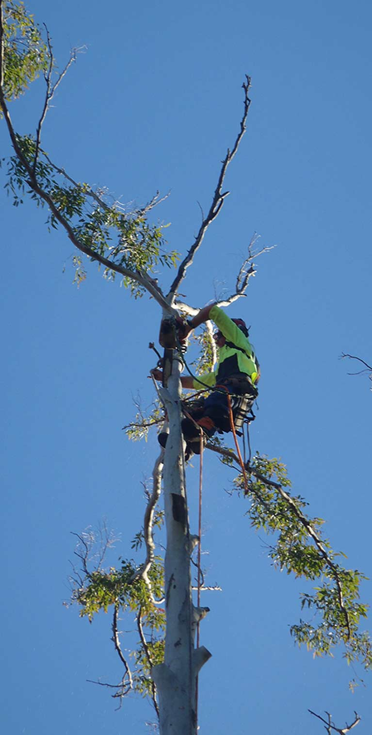 True Blue Tree and Stump Removal Tree removal specialists