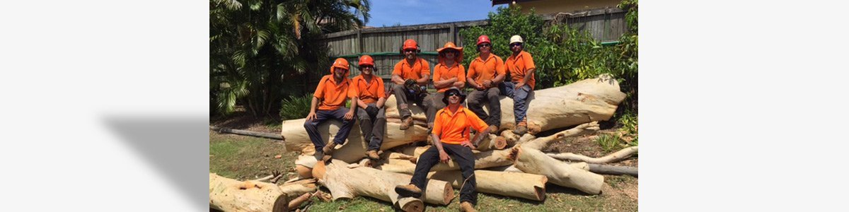 True Blue Tree and Stump Removal Stump Removal Sunshine Coast and North Brisbane