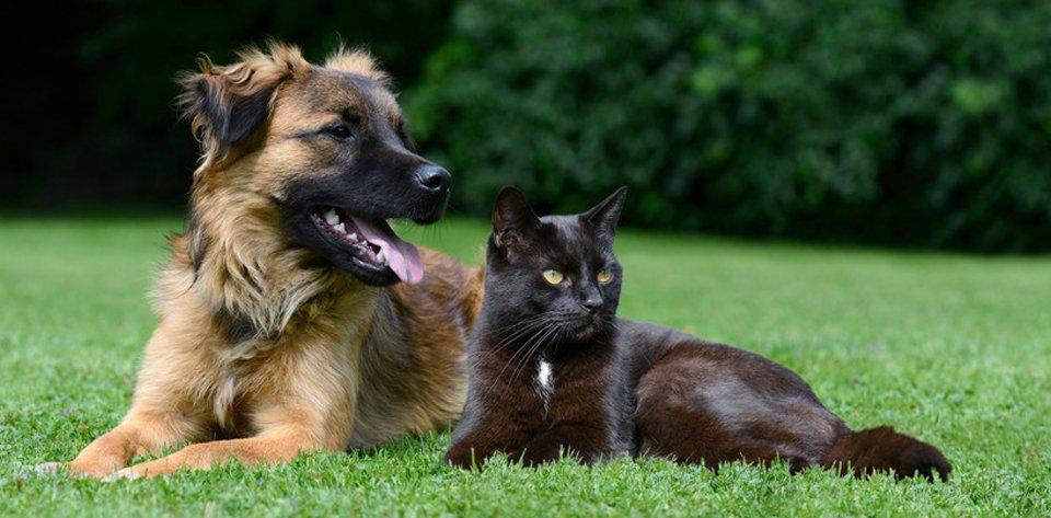 Pets resting