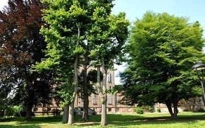 giardino casa Morelli
