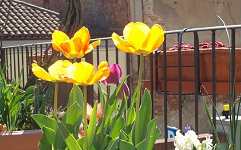 Villa Anna giardinaggio