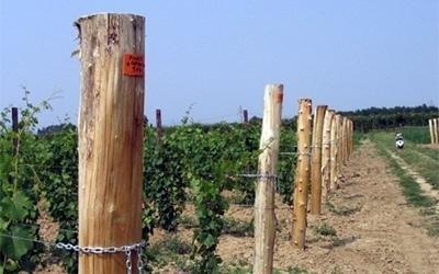 coltivazione vini doc