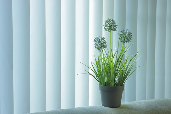 blue vertical blinds near plant