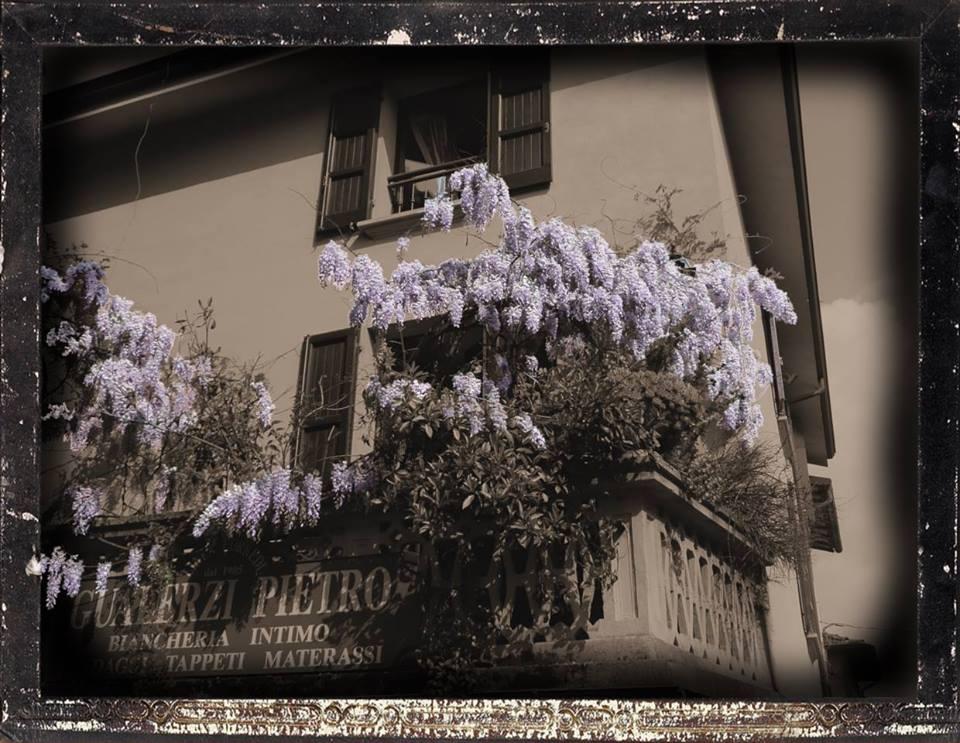 una cornice dei fiori glicine e cartello con scritto GUALERZI PIETRO