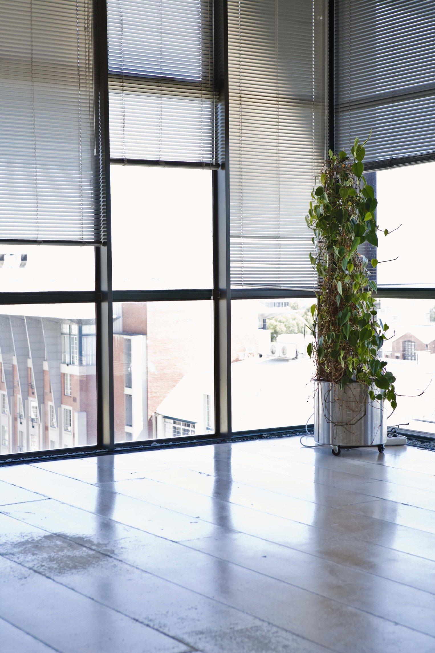 Window Blinds Washington, NC