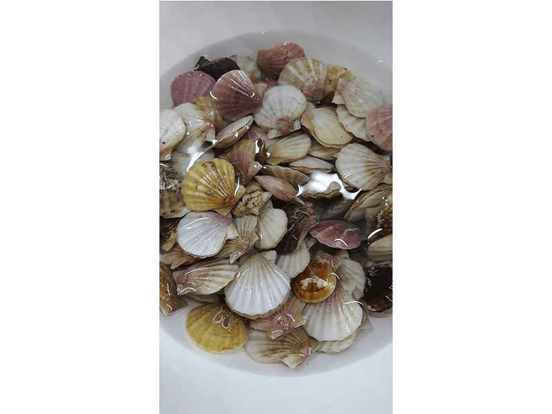 Molluschi fresci