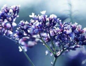 fiori-freschi