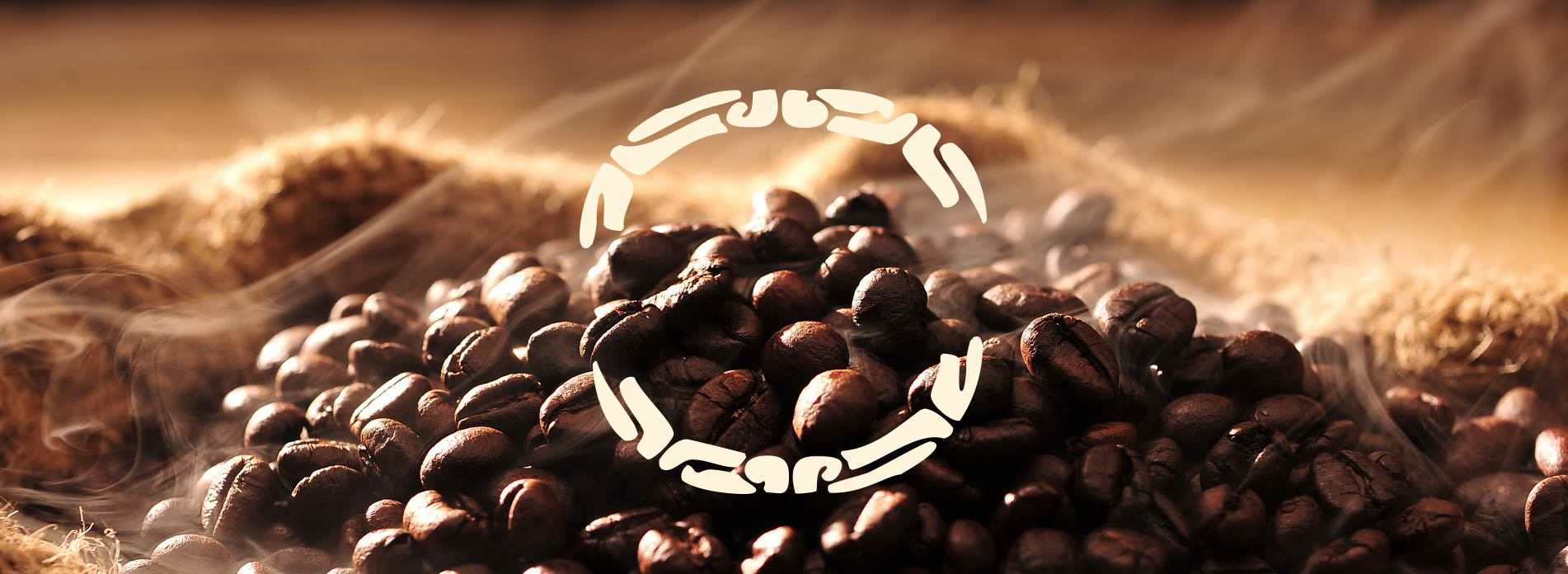 fresh unroasted coffee beans