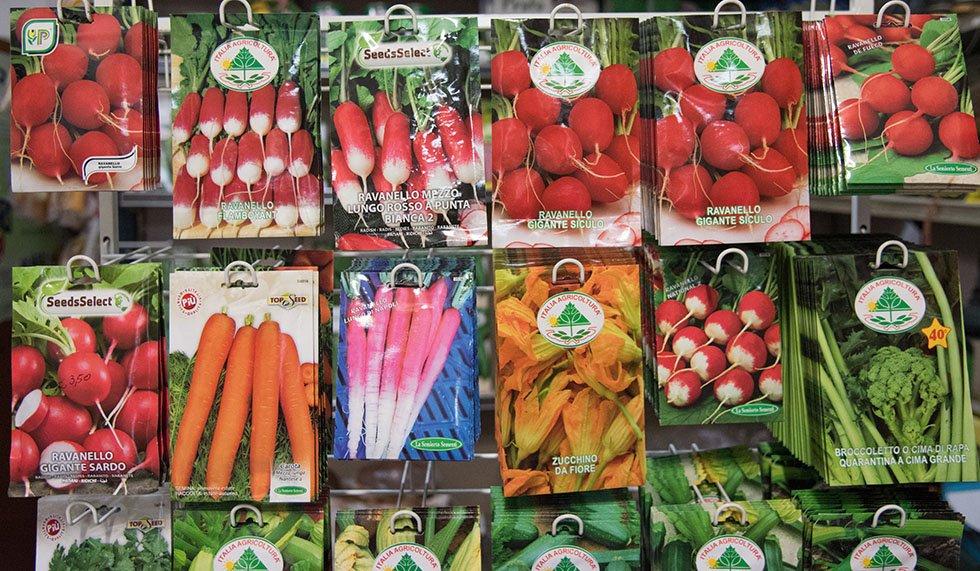 Sementi ortaggi e verdura