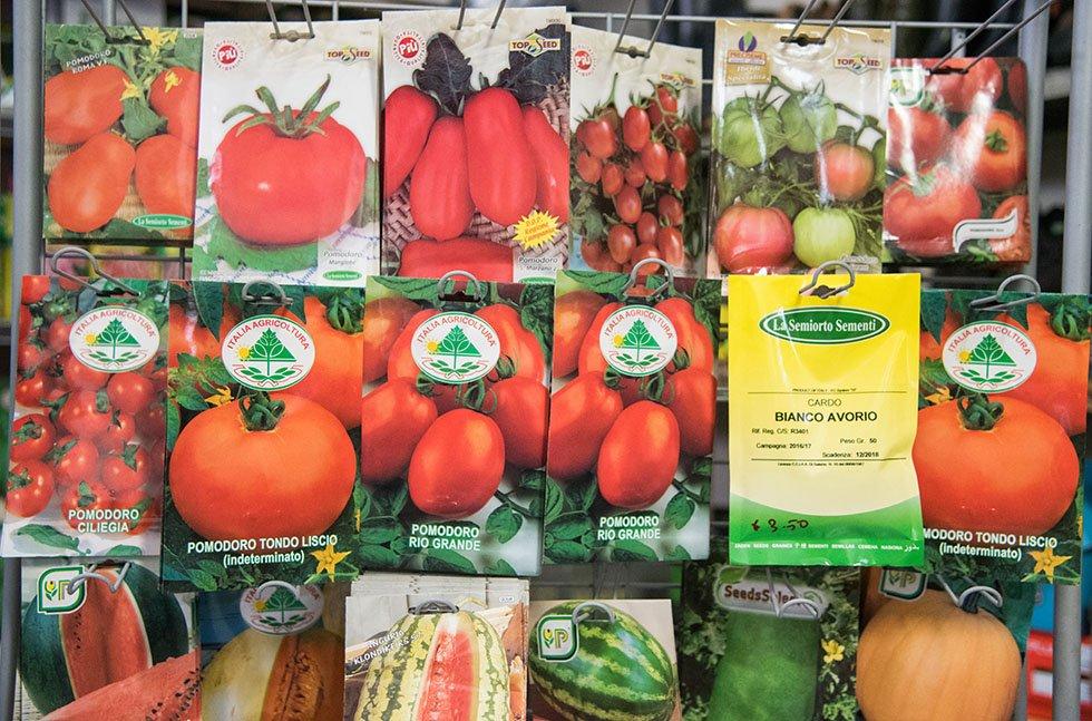 Sementi pomodoro