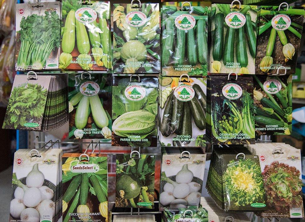 Sementi zucchino e cipolla