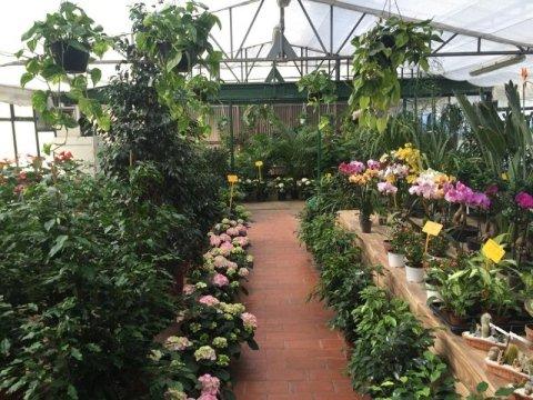 Vivaio via aurelia roma vivai aurelia for Vendita piante ornamentali