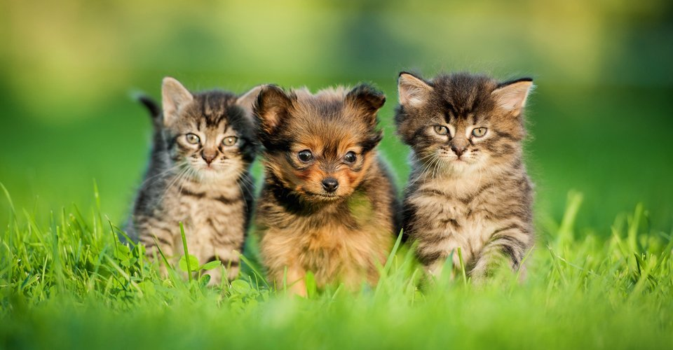 Contact Boundary Vet Clinic for small animal care in Manchester