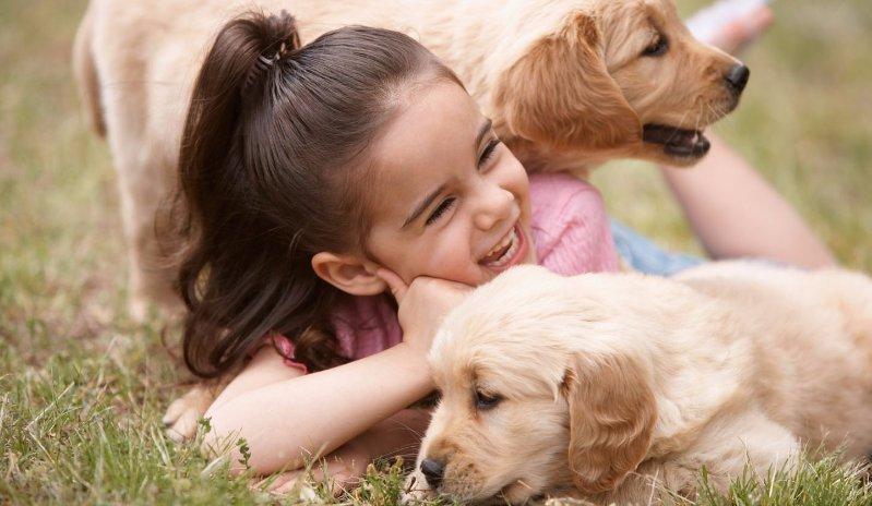 Right veterinary care for small animals