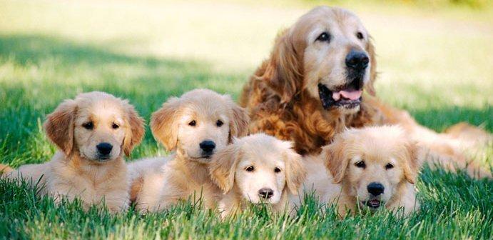 Complete pet care