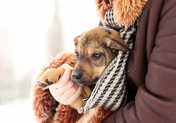 Lovely puppy in hands