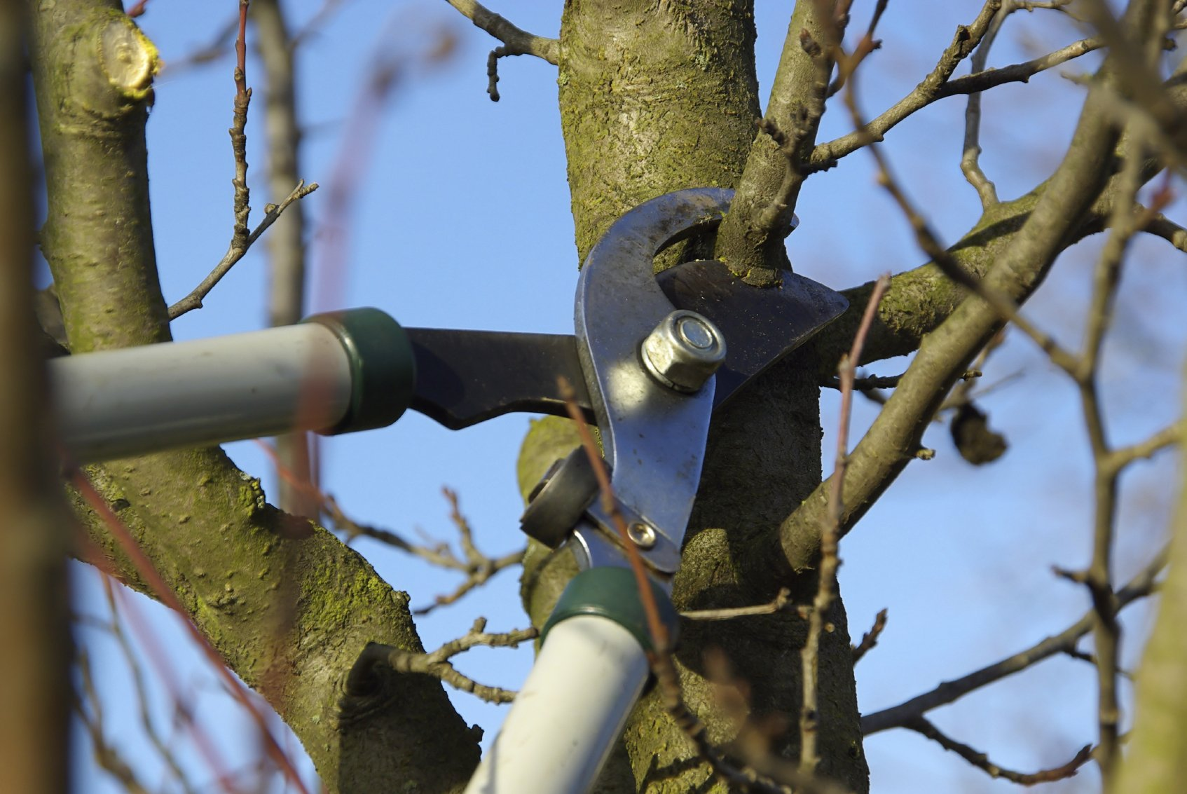 How To Prune A Tree By Tree Pruning Experts