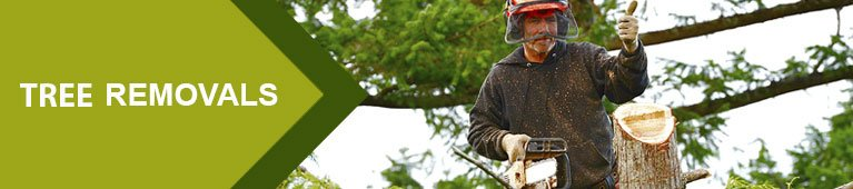 Tree felling, tree removal,stump removal,tree pruning