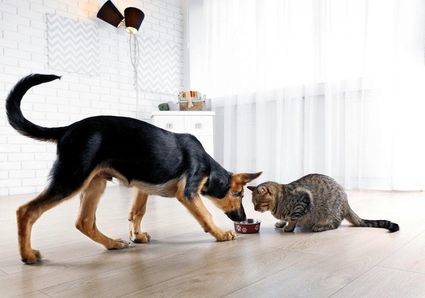 cane e gatto con ciotola