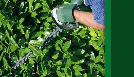 Shrub Pruning Service - Professional Shrub Pruning ...