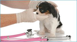 medicazioni veterinarie a domicilio