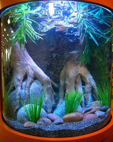 Curved Glass - Aquarium