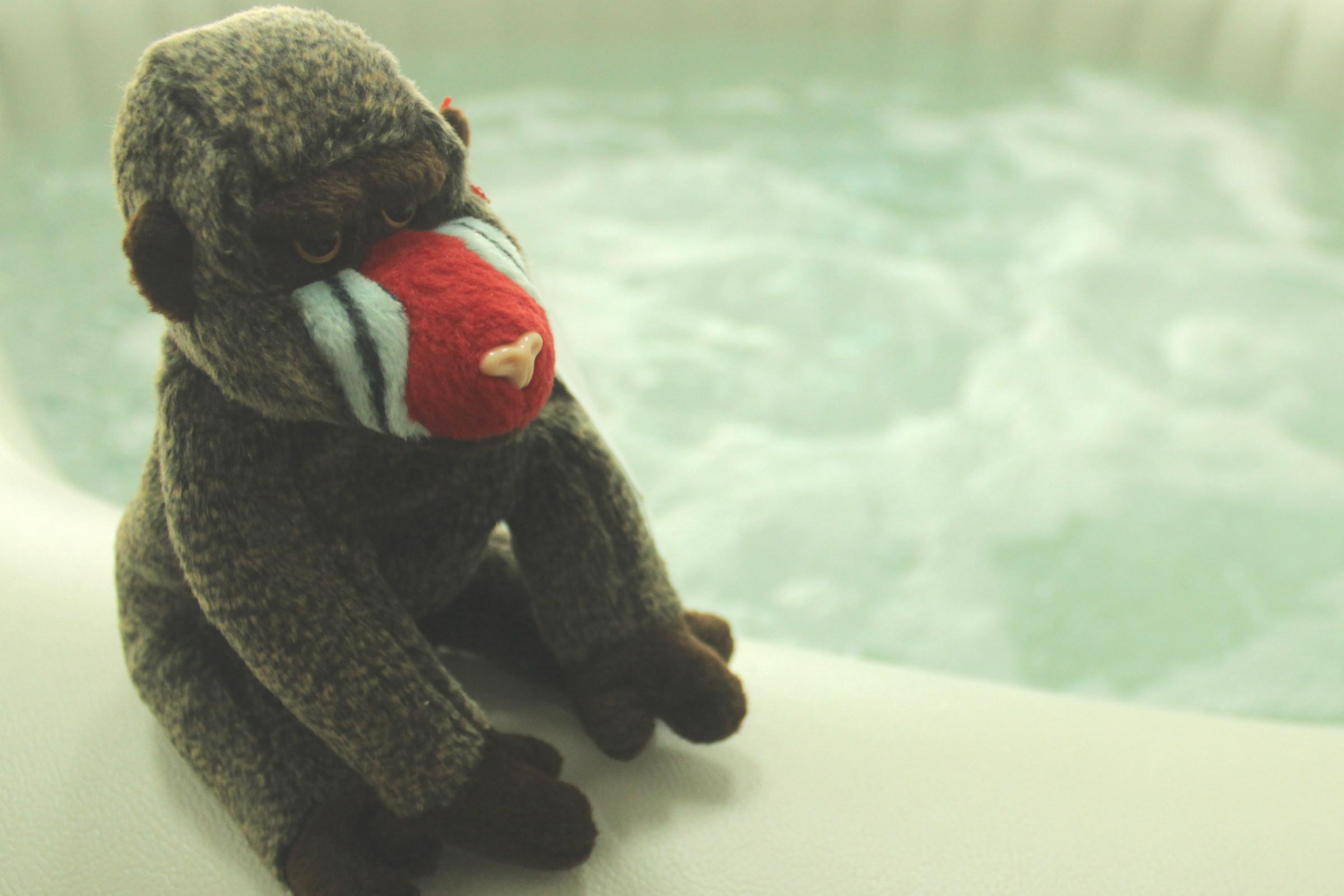 อ่างน้ำวนจากุซซี่เคลื่อนที่ อ่างน้ำสปา อ่างน้ำวน ลิงแช่น้ำในอ่างน้ำร้อน จากุซซี่โรงแรม อ่างน้ำรีสอร์ท แช่น้ำพักผ่อน