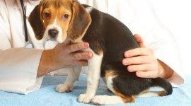 veterinario per roditori, analisi cliniche veterinarie, microchip per animali