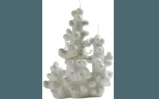 candela corallo bianco