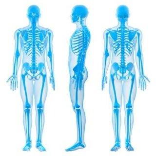 radiografia dello scheletro