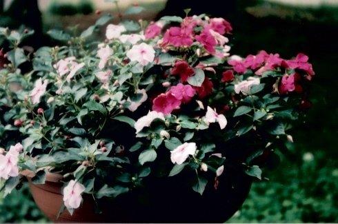 pianta villa