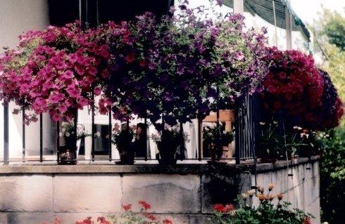 piante villa
