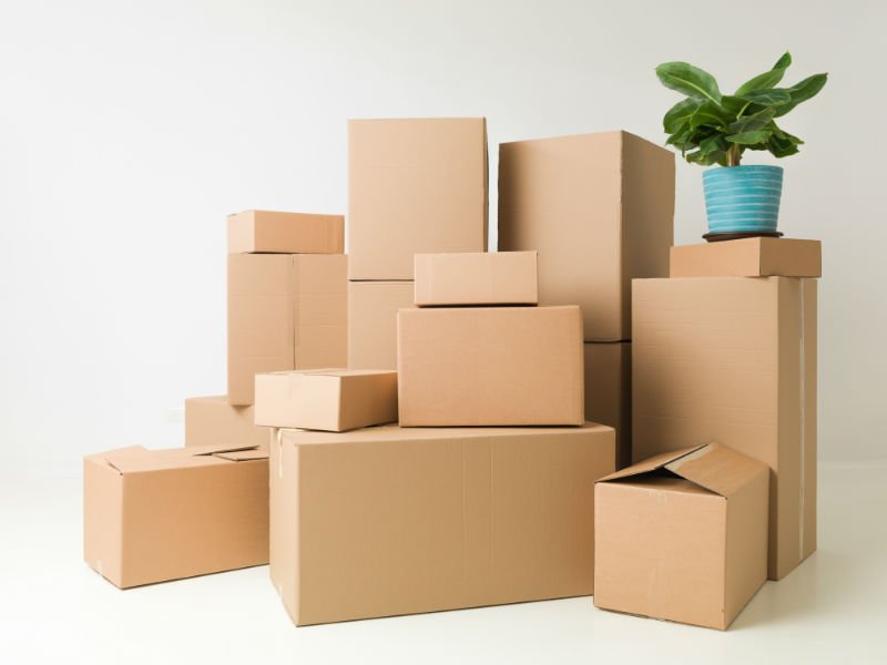 degli scatoloni e un vaso con una pianta