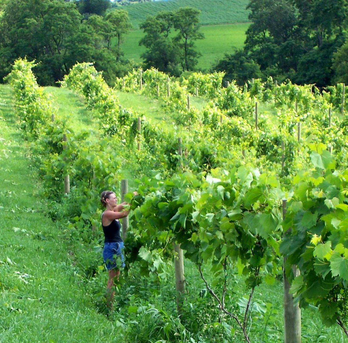 Wisconsin Wines Wisconsin Winery Association