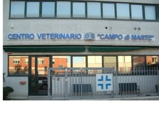 Ambulatorio veterinario, animali domestici, radiologia, ecografia