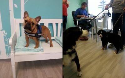 Cane alla banca di attesa mentre gli altri cani gettano della cinghia per andare a casa