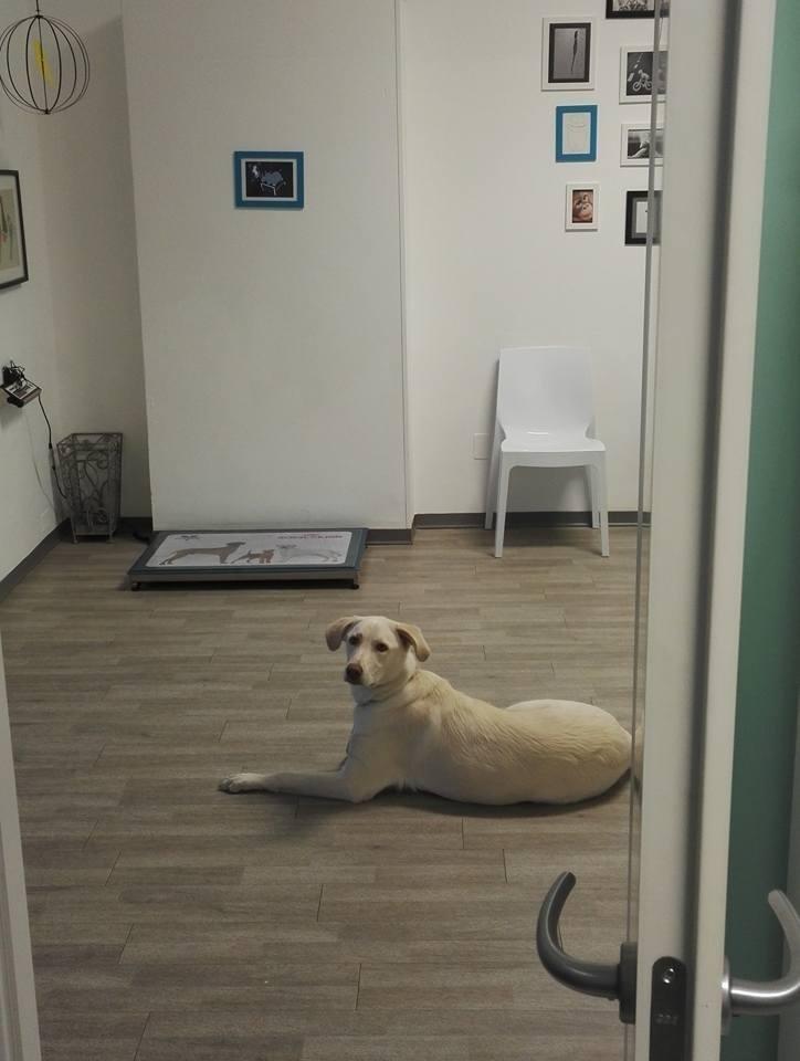 Cane che aspetta nel corridoio
