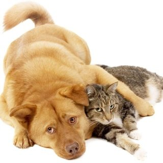 Alimenti nutritivi per cani e gatti