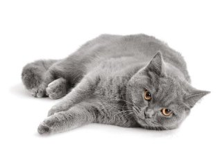 Mangimi per gatti Royal Canin