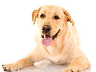 Mangimi per cani Royal Canin