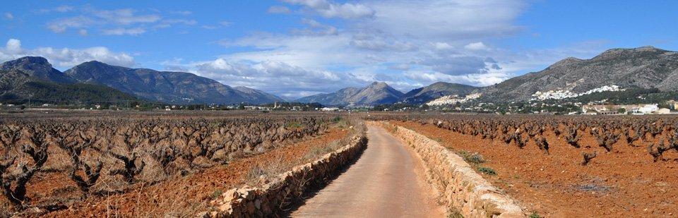 Jalon Valley vineyards