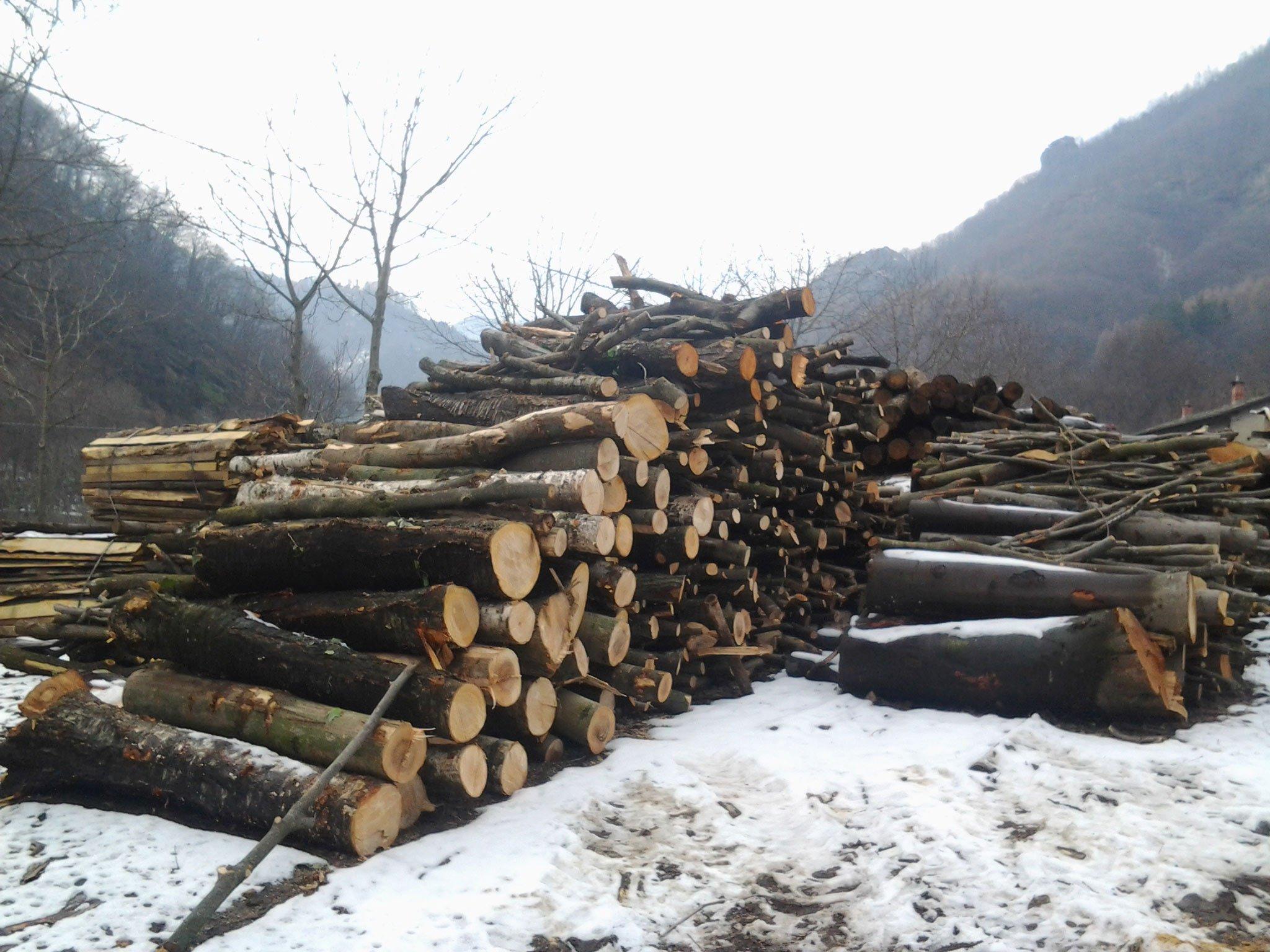 insieme di tronchi d'albero sopra un terreno innevato