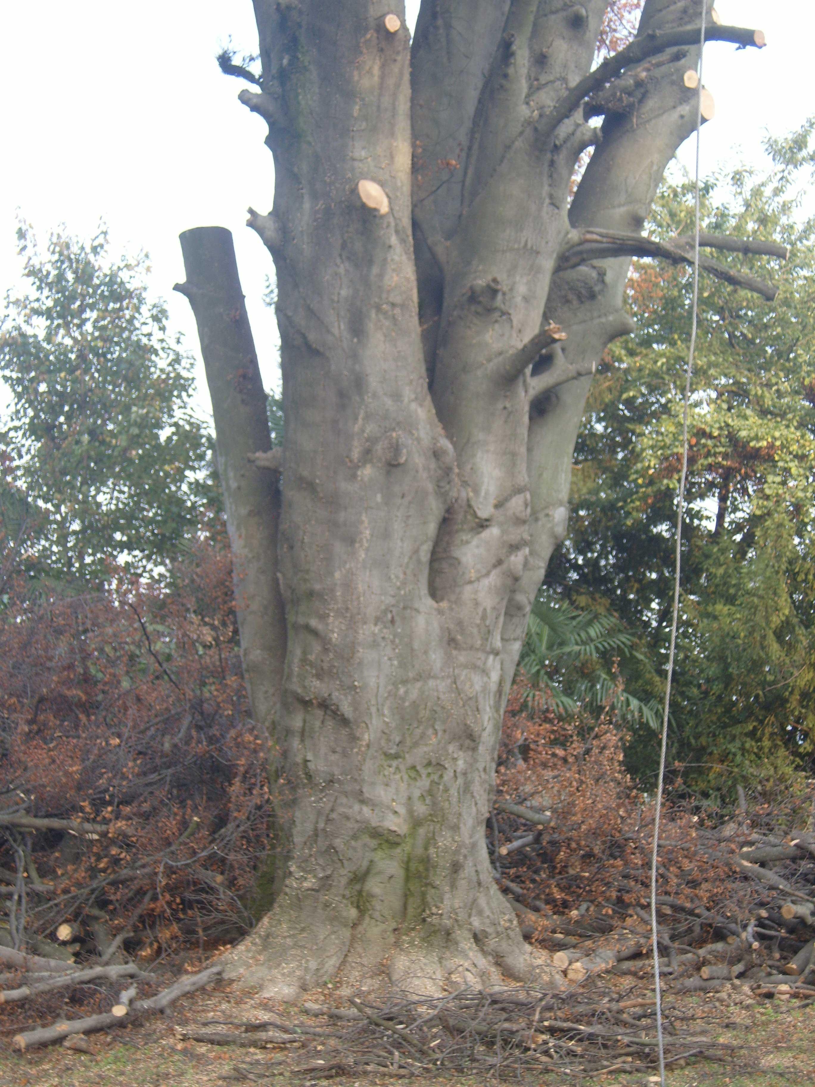 un tronco di un albero in un bosco