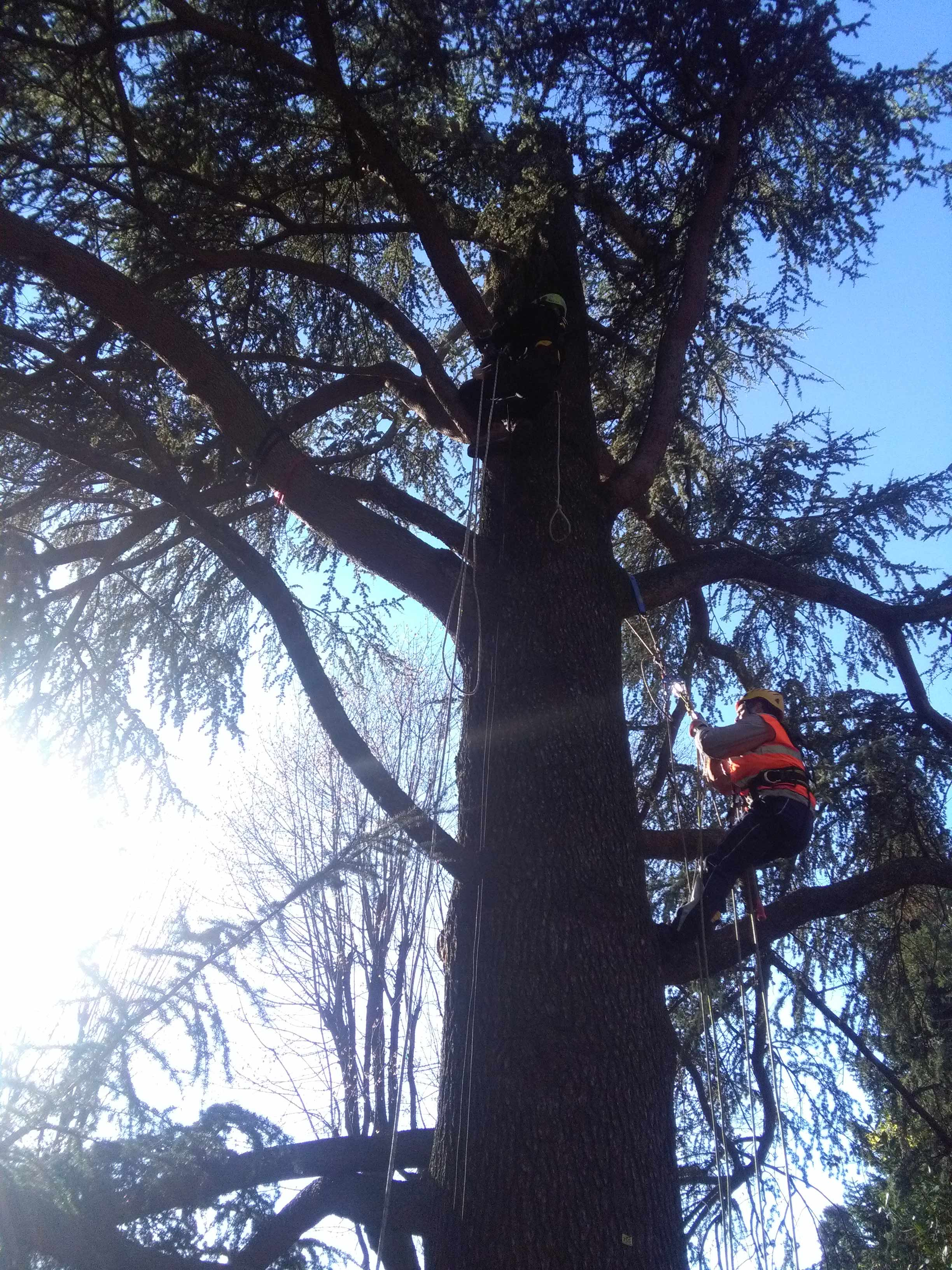 degli uomini con dei caschetti e un imbragatura con delle funi al lavoro su un albero
