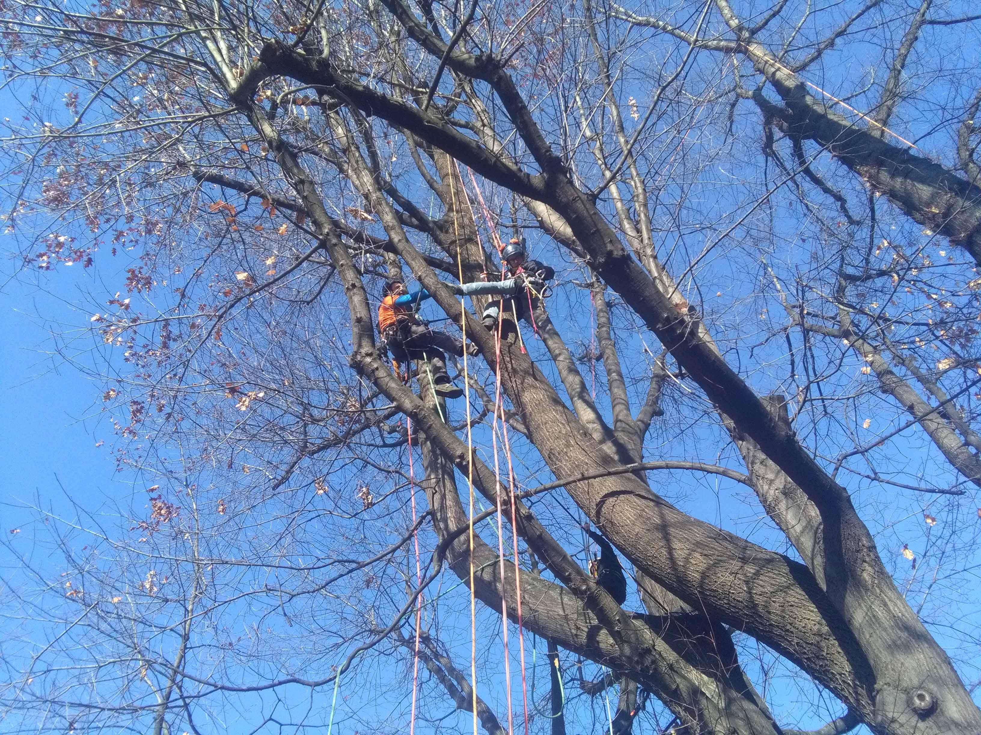 due uomini su un albero e vista delle funi di color rosso e bianco
