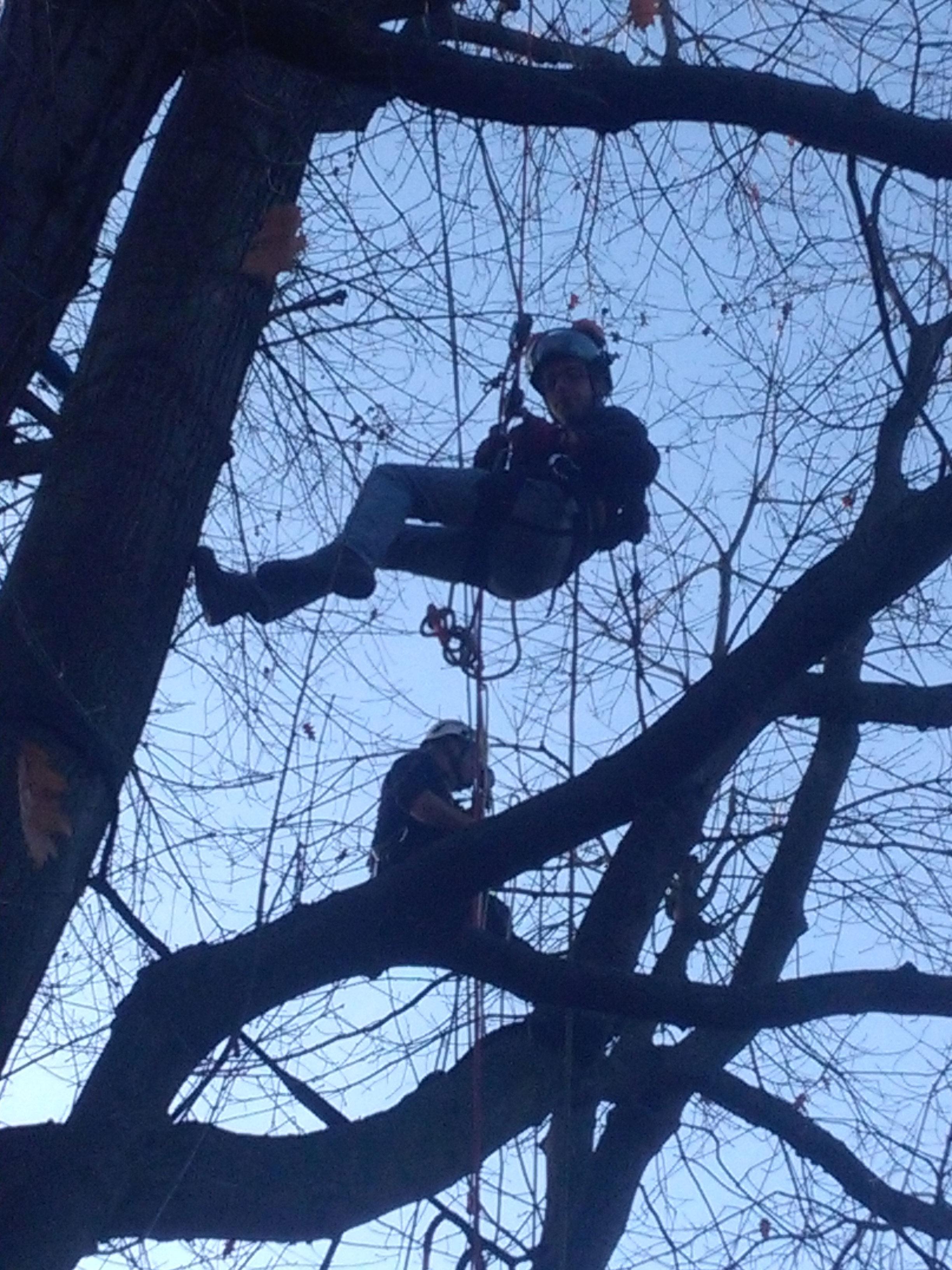 un uomo con un elmetto che sta scendendo da un albero con una fune