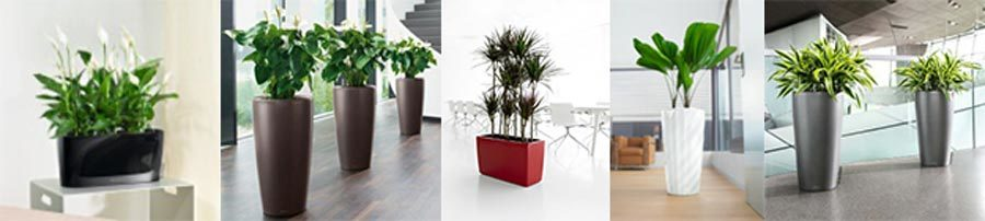 Montage of interior plants